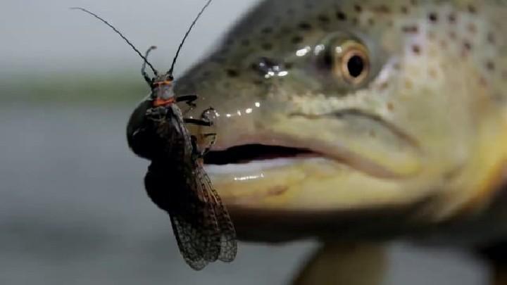 4 V Fly size 6 Rio Grande Orange Bitch Creek Sea Trout Flies